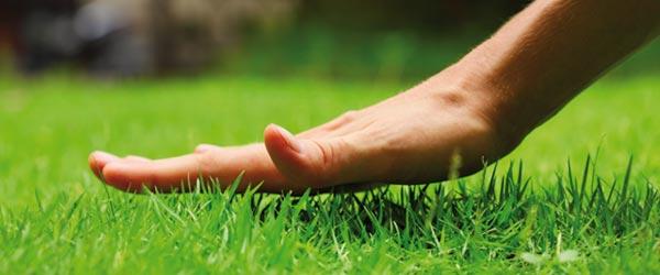 Gewusst wie: Rasen anlegen und mähen.