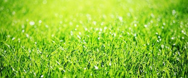 grüner saftiger Rasen